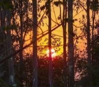 Odisha sunset.